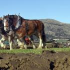 Bruce Johnston (left) and John Booth, of Ashburton, drive the only horse team at the Lake Hawea...