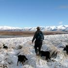 """High country farmers are in the middle of a """"revolution"""", Jonathan Wallis says. PHOTO: STEPHEN..."""