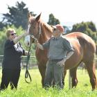 White Robe Lodge stud owners Lorraine and Brian Anderton with broodmare Ears Carol two years ago....