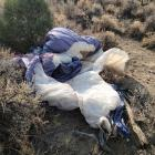 James Kiwi Oroc's glider found in Nevada. Photo: James Johnston Search Team