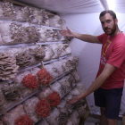 Thomas Brain with mushrooms in the special fruiting room on his Christchurch property. Photo:...