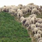 A Strong Wool Action Group has been formed to carry out the recommendations of a wool industry...