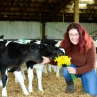 Makarewa dairy farmer Amy Johnston says ad lib feeding is easier and less time-consuming. PHOTOS:...