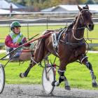 U May Cullect starts the furthest back of all the runners in race 7 at Winton tomorrow. PHOTO:...