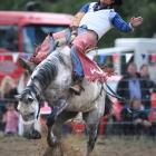 Former bareback rider Adam Williams, of Rakaia, in action at the Outram Rodeo ...