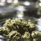 cannabis-istock.jpg
