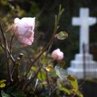 Dunedin is well-served with cemeteries and the Northern and Southern cemeteries are the resting...