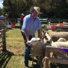 Waipara farmer Keith Berry says champion Texel ewe hoggets receive ''no special treatment''....