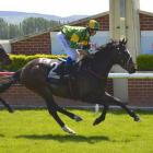 Gallant Boy  has not raced since late February. Photo: ODT files
