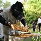 Southland Bee Society chairman Geoff Scott sets up new hives at Folster Gardens in Invercargill....