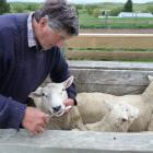 Ida Valley sheep and stud farmer Robert Gardyne is a firm believer is using the Carla test to...