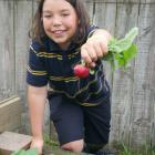 Tahuna Normal Intermediate School pupil Caius Phillips (12) holds a radish he grew in the school...
