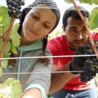 Growers say the arduous nature of fruit picking makes it difficult to attract and retain domestic...