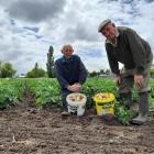 Murray Oakley (left) and John French have been growing potatoes to raise funds for the Tinwald...