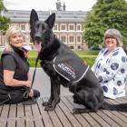 Levi, a German shepherd in training as a medical detection dog, is flanked by Pauline Blomfield...