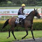 Wingatui apprentice jockey Corey Campbell returns to the birdcage after winning with the Terry...