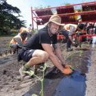 US-based cultivation technician Max Jablonski planting the cannabis seedlings. Photo: RNZ / Tracy...