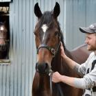 Jacob Lowry and Gallant Boy at White Robe Lodge yesterday. PHOTO: PETER MCINTOSH