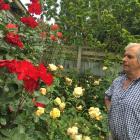 Sheep breeder Garth Shaw in his home garden at Wharetoa, near Balclutha, where he loves to work...