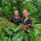 Panmure Orchards packhouse manager Jacqui Beer (left) and orchard owner Bridget Hiscock with a...