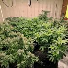 There were 353 plants seized from the flat made up of 13 different strains. Photo: Getty Images