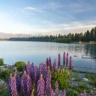 Lake Ruataniwha, Twizel. Photo: Getty Images