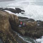 Niwa marine ecologist Leigh Tait surveys the West Coast's rugged coastline, near Punakaiki....