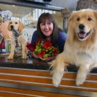 Nichol's florist Sharon Wassell holds some roses in preparation for Valentine's Day, accompanied...