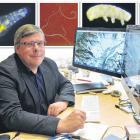 University of Otago geneticist Peter Dearden at his office in the university's biochemistry...