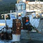 Oyster cages being pulled from Big Glory Bay in 2017 as farmed shellfish were culled to stop the...
