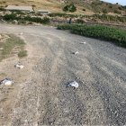 About 30 re-billed gulls were killed in the incident. Photo: Supplied