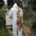 A helper inspects Maguire's healthy hives prior to the hive being decimated in February. Photo:...