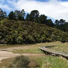 The boardwalk at the start of the Orokonui Lagoon walk.PHOTOS: CLARE FRASER
