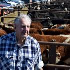 Retired trucking company owner Forbes Knight inspects calves at Mt Benger Saleyards near Roxburgh...
