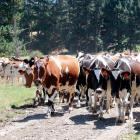 Dairy farmer Hilsley Short was dismissed unjustifiably by Clanrye Holdings Limited. Photo: File