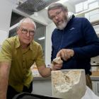 Paul Deans and Paul Scofield with the 30 million-year-old piece of turtle. Photo: Geoff Sloan 