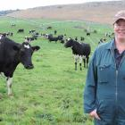 Sarah Smart on-farm with her cows at Hillbrook Dairies Ltd, where she works as assistant manager....