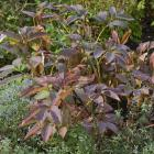Perennials may be starting to die back but their foliage continues to offer a spot of colour in...