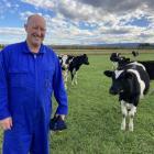 South Taieri dairy farmer David Wilson with his award-winning Friesian heifers. PHOTO: MARY-JO...