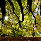 Visitors to the Dunedin Botanic Garden enjoy the mild autumn conditions as they stroll past an...