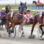 The favourite, Tease My Tartan (right), led all the way during the first race at Forbury Park...