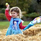 Annabelle Anderson (2), of Dunedin, hunts for Easter egg tokens in hay in the Wal's Plant Land...