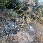 The dead ducks were found near Long Beach. Photos supplied
