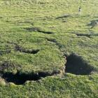Rabbit burrows such as these make farmland treacherous for humans and animals. PHOTO: SUPPLIED