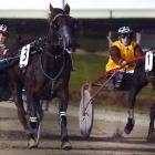 Shes So Right (right) wins the opening race from Myshout at Forbury Park last night. Photo: Peter...