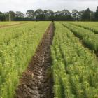 Government policies concerning climate change and land use are helping drive sales from ArborGen...