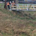 Construction workers manoeuvre a new foot bridge into place across the Silver Stream in Gladfield...