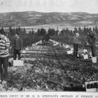 Picking fruit in Mr H.D. Stronach's orchard at Ettrick, Central Otago. — Otago Witness, 21.6.1921.