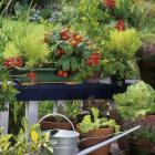 It's easy to get started growing vegetables, by planting into pots, or creating raised beds....