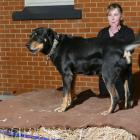 Beaumont Hotel Bark-Up organiser Jana Fransbach sets the pace during Saturday night's inaugural...